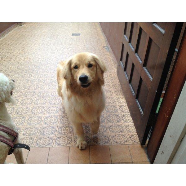 Adestrador Canino Preços no Jardim Haddad - Empresa de Adestradores de Cães