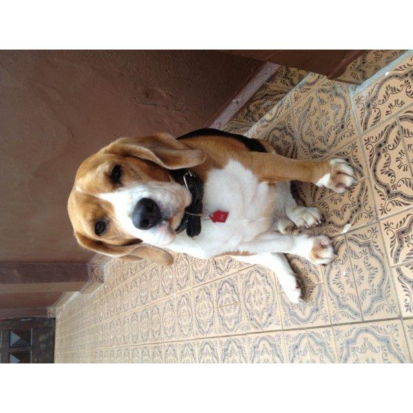 Adestrador Canino Quanto Custa em Média na Chácara do Castelo - Empresa de Adestradores de Cães