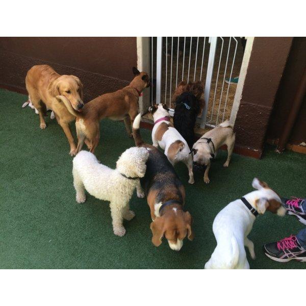 Adestrador Canino Valor no Parque Gerassi - Adestrador de Cães em Santa Maria