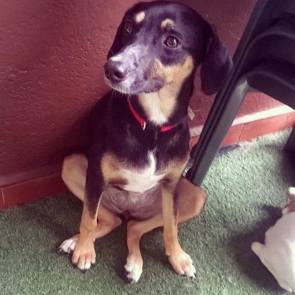 Adestrador de Cachorros Preços no Conjunto Butantã - Adestrador de Cães em Santa Maria