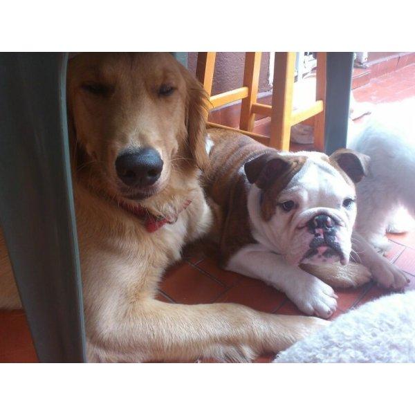 Adestrador de Cachorros Valores na Vila Ipojuca - Adestrador de Cães em Santa Maria