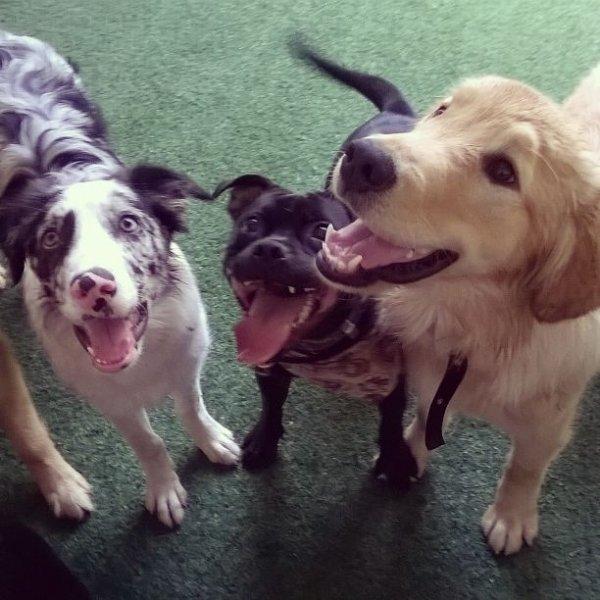 Adestrador Profissional Preciso Contratar na Vila Campestre - Adestrador de Cães em Santa Maria