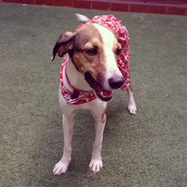 Adestrador Profissional Quanto Custa em Média no Jardim Paraíso - Adestrador de Cães em Santa Maria