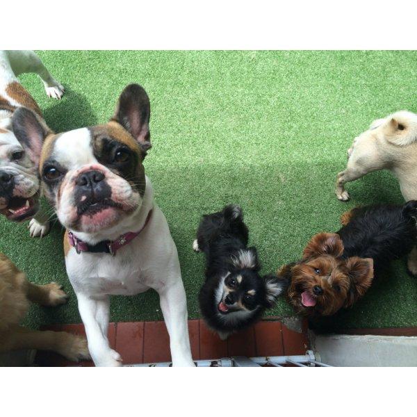 Adestradores de Cachorro na Vila Anchieta - Adestrador de Cães no Bairro Olímpico