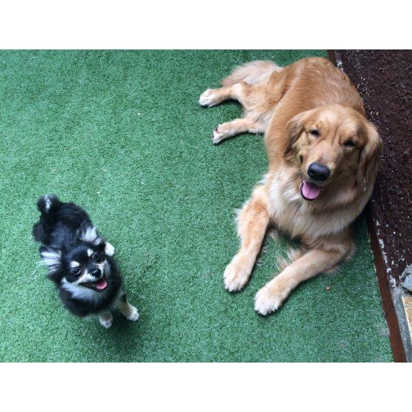 Adestradores de Cachorros Preços na Chácara Klabin - Adestrador de Cães no Bairro Olímpico