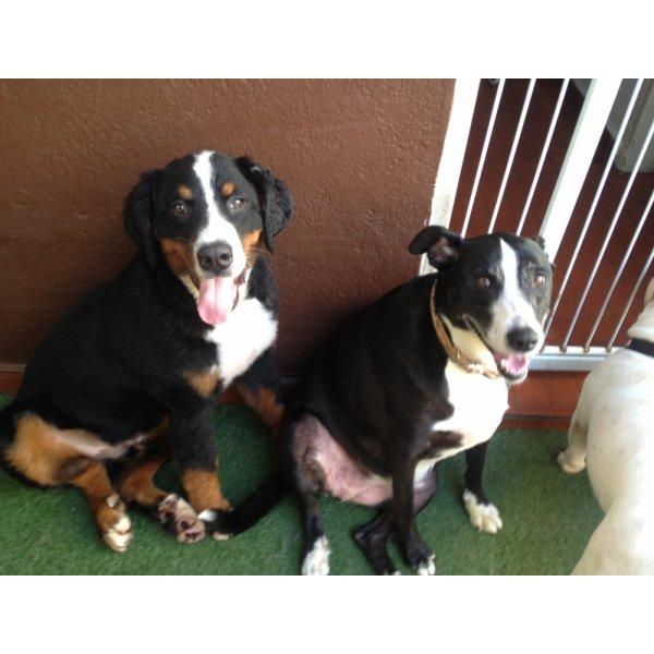 Adestradores Profissionais Contratar na Chácara Maranhão - Adestrador de Cães em São Bernardo