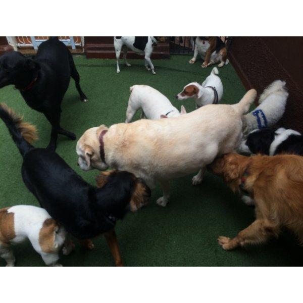 Adestradores Profissionais de Cachorro na Vila Príncipe de Gales - Adestrador de Cães em São Bernardo