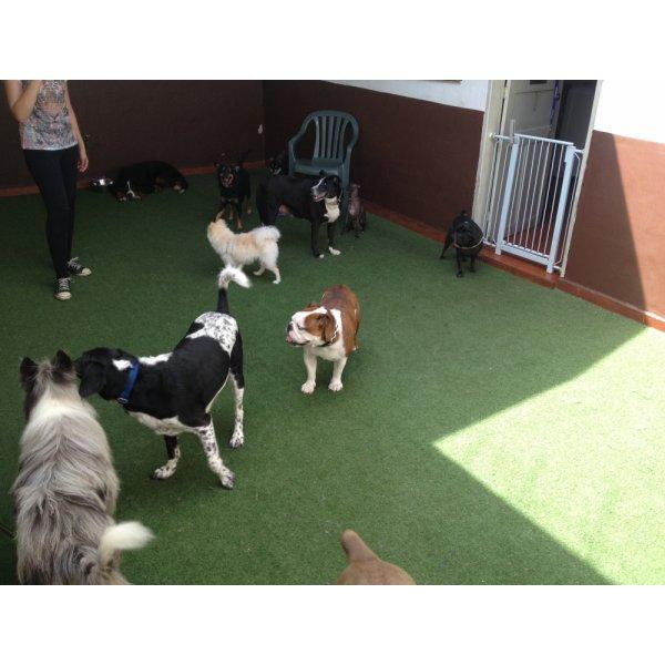 Adestradores Profissionais na Vila Bertioga - Adestrador de Cães em São Bernardo