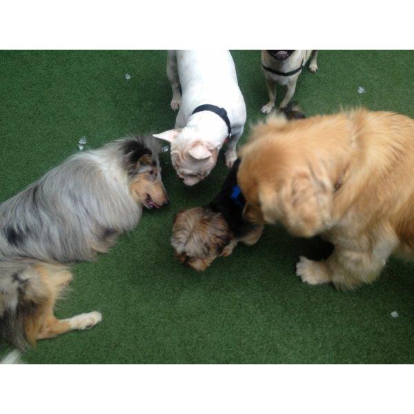 Adestradores Profissionais para Cachorro Contratar na Chácara Monte Alegre - Adestrador de Cães em São Bernardo