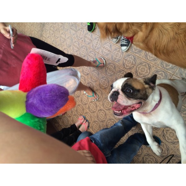Adestradores Profissionais para Cachorro Preço no Jardim Cotching - Adestrador de Cães em São Bernardo