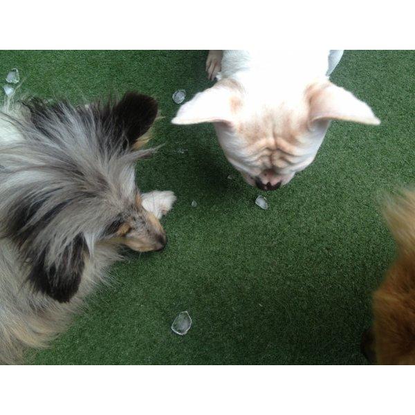 Adestradores Profissionais para Cachorro Valor na Cidade São Jorge - Adestrador de Cães em São Bernardo