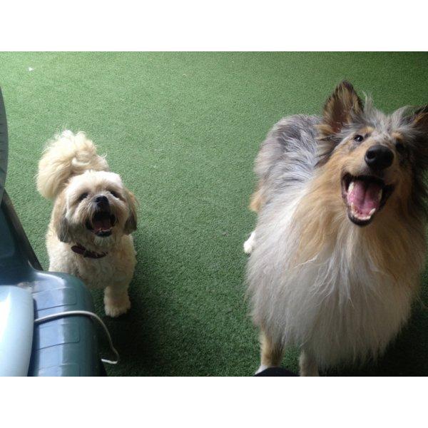 Adestradores Profissionais para Cachorro Valores no Jardim Ana Maria - Adestrador de Cães em São Bernardo