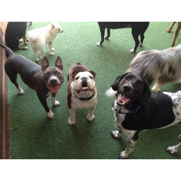Adestradores Profissionais Preço no Jardim Pinheiros - Adestrador de Cães em São Bernardo