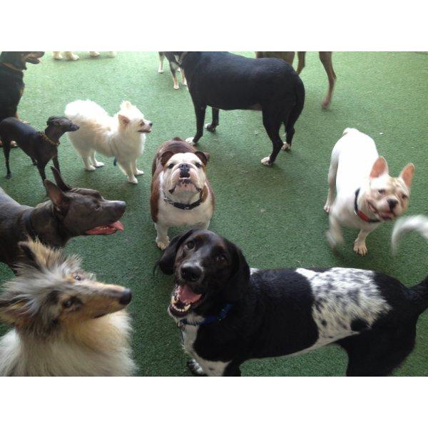 Adestradores Profissionais Preços no Jardim Cedro do Líbano - Adestrador de Cães em São Bernardo