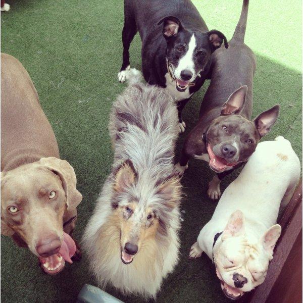 Adestradores Profissionais Valor em Interlagos - Adestrador de Cães em São Bernardo