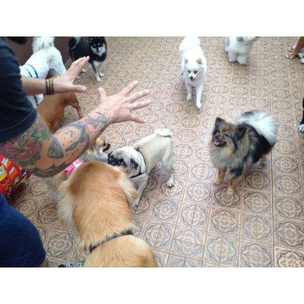 Adestramento de Cachorro com Valores Acessíveis no Jardim Ciprestes - Adestramento para Cães ABC