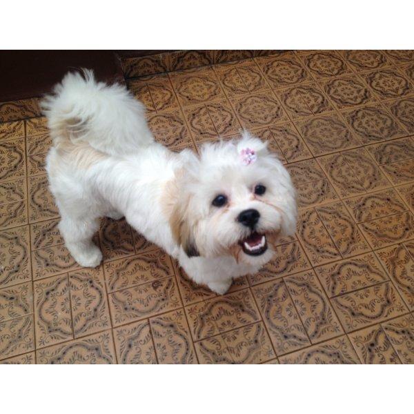 Adestramento de Cachorro Preço na Chácara do Castelo - Adestramento para Cães ABC