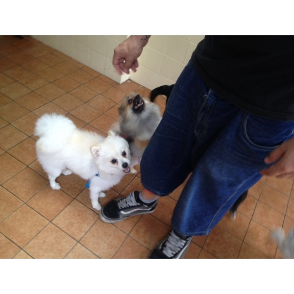 Adestramento de Cachorro Preços no Jardim das Rosas - Adestramento de Filhotes