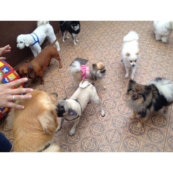 Adestramento de Cachorro Quanto Custa em Média na Vila Argentina - Adestramento de Filhotes