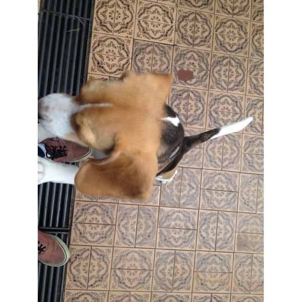 Adestramento de Cachorro Quanto Custa no Jardim Fonte do Morumbi - Adestramento para Cães ABC