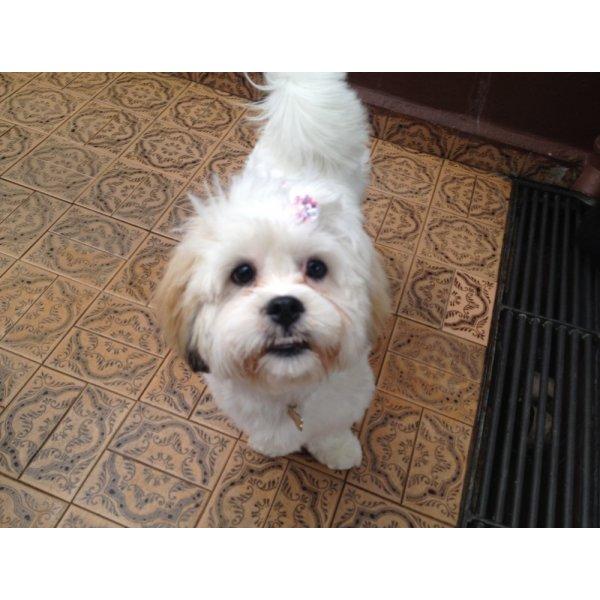 Adestramento de Cachorro Valor no Jardim Metropolitano - Adestramento para Cães ABC