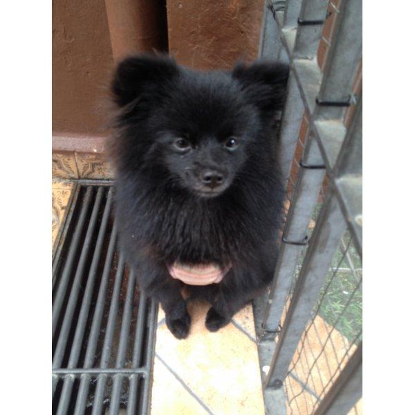 Adestramento de Cachorro Valores em Camilópolis - Adestramento para Cães ABC