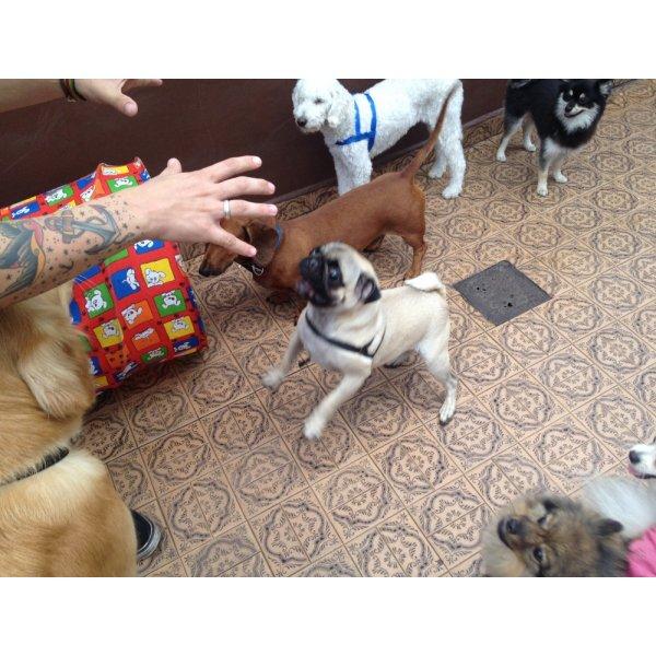 Adestramentos de Cachorro Preço na Vila Anastácio - Adestramento de Filhotes