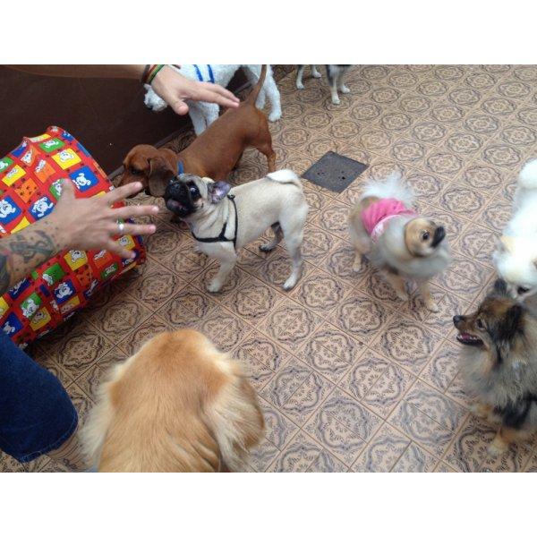 Adestramentos de Cachorro Preços em Prosperidade - Adestramento de Filhotes