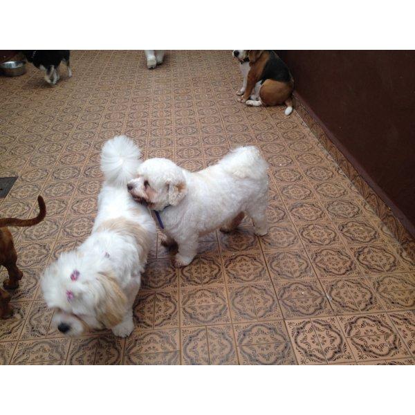 Adestramentos de Cachorro Quanto Custa em Média no Eldorado - Adestramento para Cães ABC