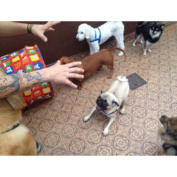 Adestramentos de Cachorro Valor na Vila São José - Adestramento de Filhotes