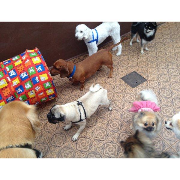 Adestramentos de Cachorros na Saúde - Adestramento de Filhotes