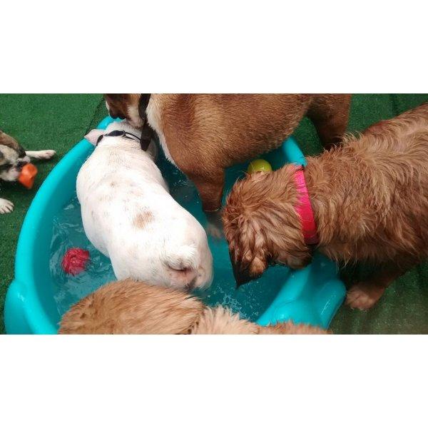 Babá de Cachorro Contratar na Vila Tibiriçá - Empresa de Dog Sitter