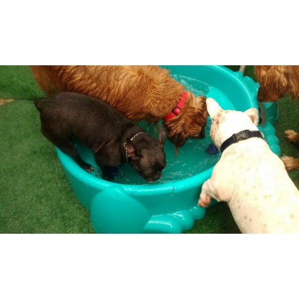 Babá de Cachorro Preço no Rudge Ramos - Empresa de Dog Sitter