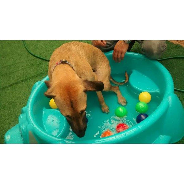 Babá de Cachorro Quanto Custa em Média na Vila Bastos - Babá de Cachorro
