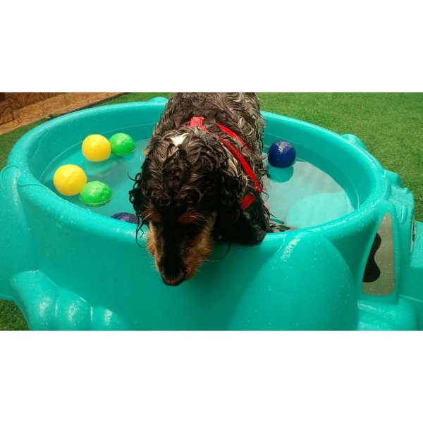 Babá de Cachorro Quanto Custa no Jardim Tropical - Dog Sitter no Bairro Jardim