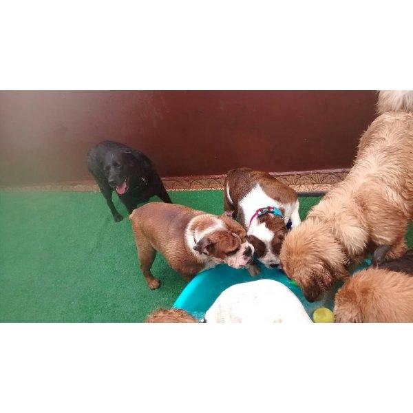 Babá de Cachorro Valores na Vila Caraguatá - Empresa de Dog Sitter