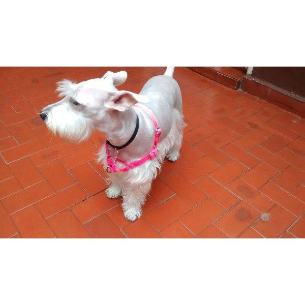 Babá para Cachorro na Vila Santa Tereza - Serviço Dog Sitter