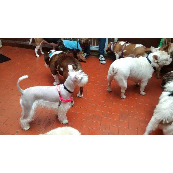 Babá para Cachorros no Jardim Santo Amaro - Serviço Dog Sitter