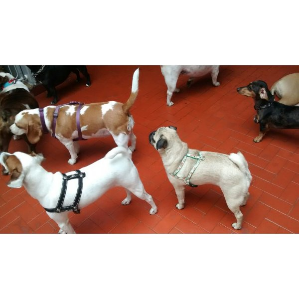 Babá para Cachorros Preço na Vila Sá - Serviço Dog Sitter