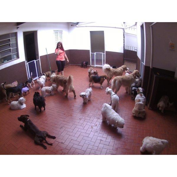 Babá para Cães Contratar no Jardim Alzira Franco - Babá para Cães