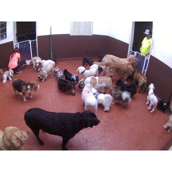 Babá para Cães no Jardim São Martinho - Serviço de Babá de Cachorros Filhotes
