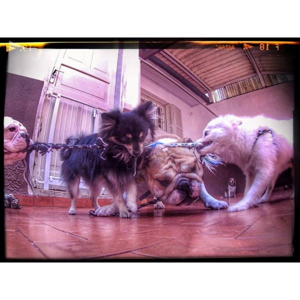 Babá para Cães Onde Contratar no Parque Vila Maria - Dog Sitter no Bairro Jardim