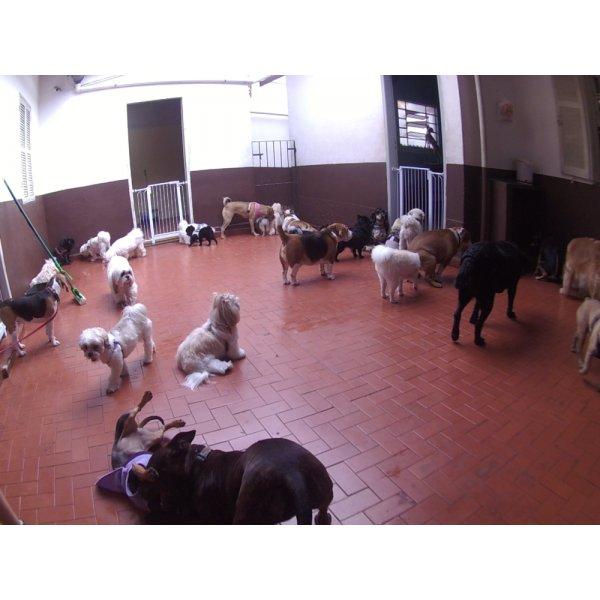 Babá para Cães por um Valor Bom na Vila Valparaíso - Dog Sitter em São Bernardo