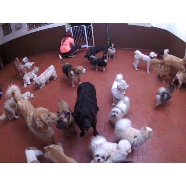 Babá para Cães Preços no Jardim Vila Rica - Dog Sitter em São Bernardo