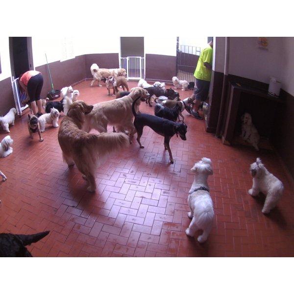 Babá para Cães Quanto Custa no Centro - Dog Sitter em São Bernardo