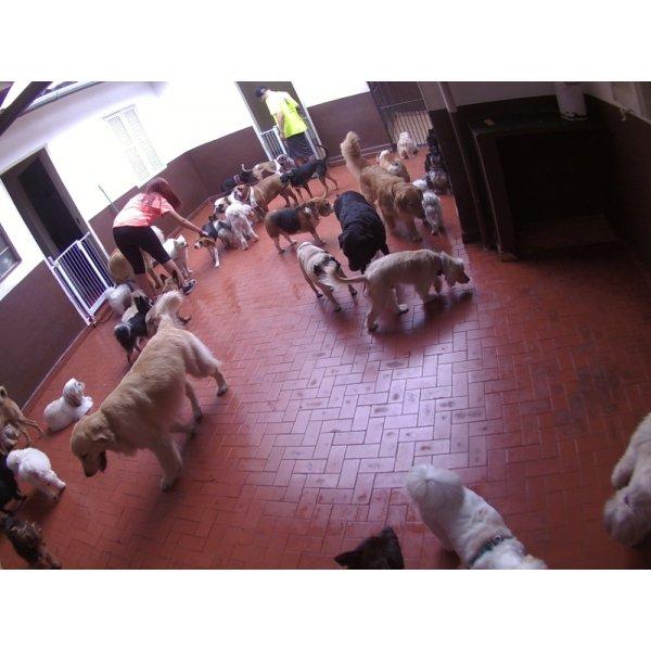 Babá para Cães Valores na Vila Camilópolis - Dog Sitter no Bairro Jardim