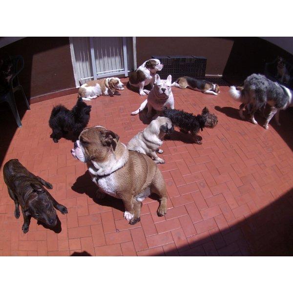 Como Contratar Day Care Canino no Centro - Day Care Canino