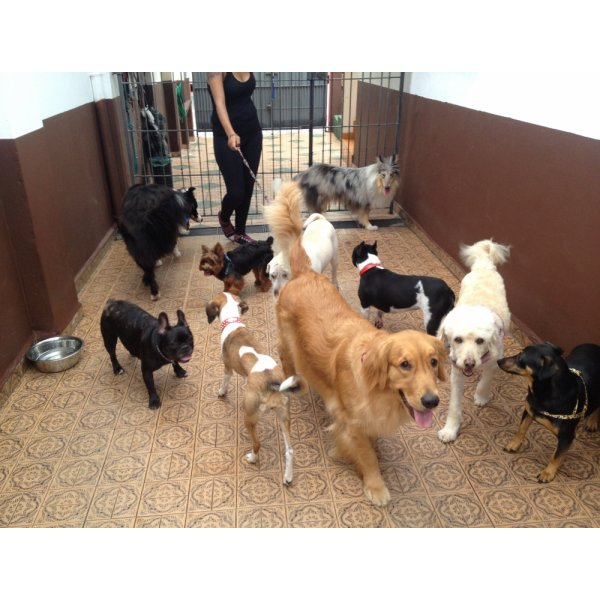 Contratar Adestrador Canino na Chácara Flora - Adestrador de Cães em São Caetano