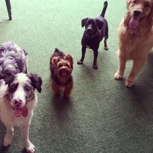 Contratar Dog Walker no Jardim Léa - Serviço de Dog Walker Preço