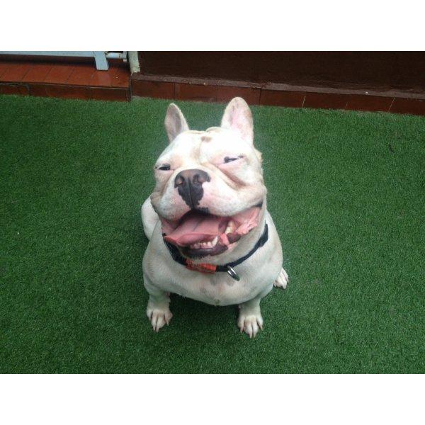Contratar Passeador de Cachorro na Liberdade - Passeador de Cães SP